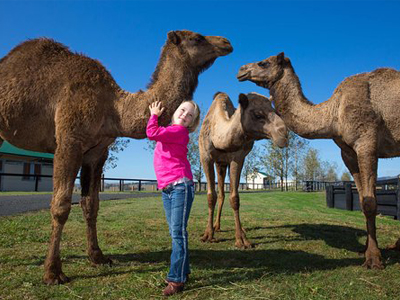 Hunter Valley Camels 1